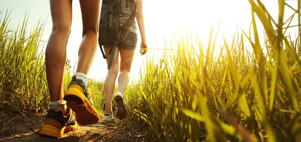 What You Need to Know about Lyme Disease - banner